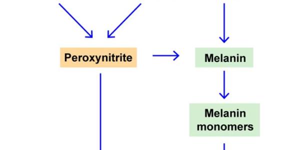 Rol de la radiación UVA en la patogenesis del melanoma